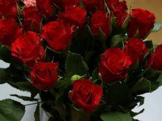 Photo 14 vörös rózsa