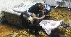 Un hombre golpea la cuna del bebé ahora mira lo que hace el gato #viral