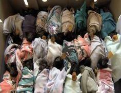 Baby Bats in Blankets#.stQlpl3y3d#.stQlpl3y3d