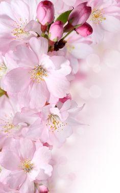 John Califano (1864 – 1946, Italian-born American) Flower Background Wallpaper, Flower Phone Wallpaper, Cute Wallpaper Backgrounds, Pretty Wallpapers, Flower Backgrounds, Iphone Wallpaper, Spring Flowers Wallpaper, Flower Frame, Flower Art
