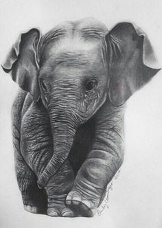 Pencil Drawing Tutorials Elephant Pencil Print - This is an inch print from an original hand drawn pencil portrait of a baby elephant. It's a great gift for any elephant lover! Baby Elephant Drawing, Elephant Sketch, Elephant Love, Elephant Art, Elephant Tattoos, African Elephant, Elephant Drawings, Geometric Elephant, Elephant Illustration