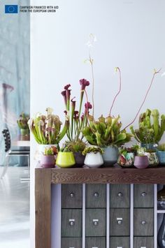 Carnivorous plants are the Houseplants for September | The joy of plants