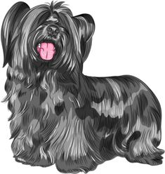 Dogs Breed Vector Images (over Chow Dog Breed, Beagle Dog Breed, Purebred Dogs, Skye Terrier, Terriers, Terrier Dog Breeds, Bull Terrier Dog, Doodle Dog Breeds, Black Dogs Breeds