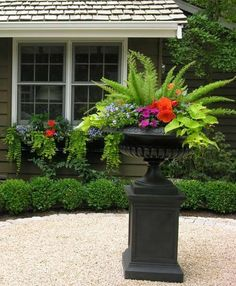 Love the fern in planting…would be good on front porch…very little sun.  | followpics.co