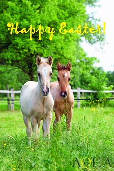 Happy Easter from the American Quarter Horse Association!