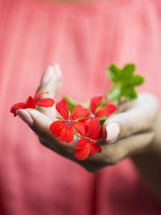 Flowers for you Love Rose Flower, Hand Flowers, Flower Power, Beautiful Flowers, Dreamy Photography, Hand Photography, Flower Girl Photos, Red Geraniums, Love Garden