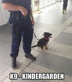 My dream job. I secretly wish i could handle the police academy so I could work with the K9 unit.