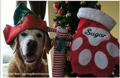 Now he's Santa's helper