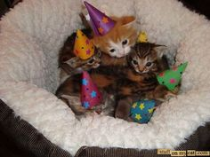 Kittens wearing party hats. My day is made.