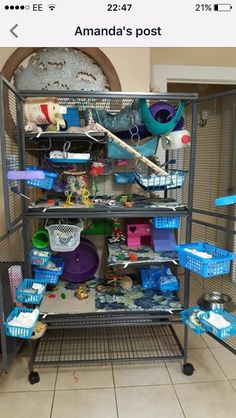 Pet Accessories Diy Rat Toys Ideas For 2019 Hamsters, Pet Rodents, Cute Ferrets, Chinchillas, Cage Rat, Pet Rat Cages, Pet Cage, Chinchilla Cage, Ferret Cage