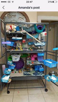Pet Accessories Diy Rat Toys Ideas For 2019 Rat Cage Diy, Pet Rat Cages, Pet Cage, Chinchilla Cage, Ferret Cage, Hamster Cages, Sugar Glider Toys, Sugar Glider Cage, Cute Ferrets