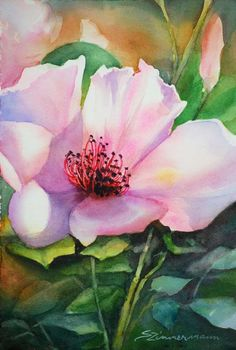 Original watercolor paintings by artist, Sue Zimmermann
