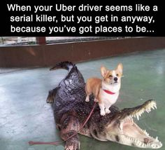 13 Animals Who Are Using The Uber Services (Memes) - Funny Dog Quotes - 13 Animals Who Are Using The Uber Services (Memes) Funny Husky Meme Funny Husky Quote Husky Humor, Funny Husky Meme, Dog Quotes Funny, Funny Animal Memes, Cute Funny Animals, Funny Animal Pictures, Funny Dogs, Funny Memes, Real Memes