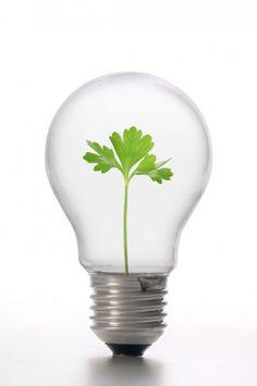 Sustentabilidade,ecologia,matriz energética