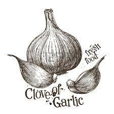 Výsledok vyhľadávania obrázkov pre dopyt garlic illustration
