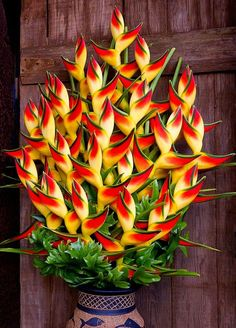How to Care for a Lobster Claw Heliconia Plant