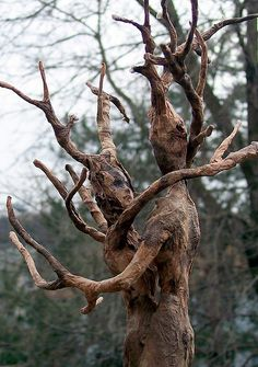 Natures dance ;; intertwined