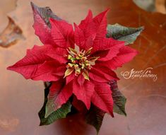 Red sugar Poinsettia by Sweet Symphony