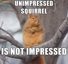 Unimpressed with all your spongebob memes guys . Browse new photos about Unimpressed with all your spongebob memes guys . Most Awesome Funny Photos Everyday! Because it's fun! Funny Squirrel Pictures, Squirrel Memes, Cute Squirrel, Funny Animal Pictures, Squirrels, Animal Pics, Cute Animal Memes, Funny Animals, Cute Animals