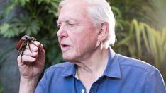 Upcoming BBC App Will Let You Watch David Attenborough Clips Absolutely Free David Attenborough, This Man, On Set, Natural World, Bbc, Let It Be, Monsters, Bing Images, Insects