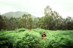 Ferns!  by David Boyson Cooper