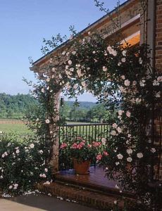 small cabin plans - climbing roses on front porch
