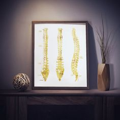 Faux gold foil spine anatomy print is perfect for medical office décor or chiropractor gifts.  PLEASE NOTE: Frames not included (only print).  Part of