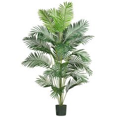 Want to add a creative touch to your home or office without spending a fortune? This grand style Paradise palm is sure to do the trick. Standing 7 feet tall, this stately beauty adds life to any décor. Twenty-one natural looking fronds embellish this gorgeous tree from head to toe. Each individual frond is carefully crafted with a lush mix of wispy feathery shaped leaves. Guaranteed to provide years of hassle free beauty.