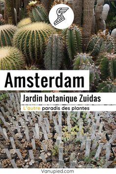 Jardin botanique Zuidas à Amsterdam : Hors de sentiers battus et gratuit. Dans le sud. Guide Amsterdam, Photos Du, Gardens, Black Picture, Pathways, Botany, Plant, Pretty