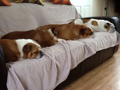 ❤ Happiness is --- no place to sit --- because there are tooooo many bulldogs on the couch! ❤ Posted on Bulldog Pics
