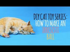 :) Welcome to the Friskies Do-It-Yourself Toy Maker Series! Watch this video to learn how to make the perfect toy for your knotty kitty: the knotty spider! Homemade Cat Toys, Diy Cat Toys, Purina Friskies, Cat Run, Cat Crafts, Maker, Cat Food, Cool Cats, Videos