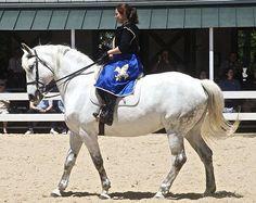 Spanish Norman Horse - Spain