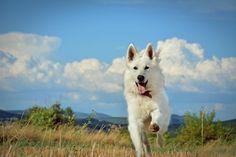 SO Beautiful !! #cute #dog #animal #pet COme on Yummypets.com it's amazing !