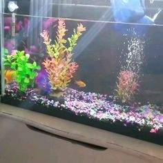 Keeping your fish tank or aquarium clean is critical to keep your pets healthy. But it takes time and effort to do it! Forget that! This innovative cube purifier does the job for ya! Small Fish Tanks, Cool Fish Tanks, Saltwater Fish Tanks, Amazing Fish Tanks, Cool Fish Tank Decorations, Fish Aquarium Decorations, Aquarium Fish, Aquarium Sump, Self Cleaning Fish Tank