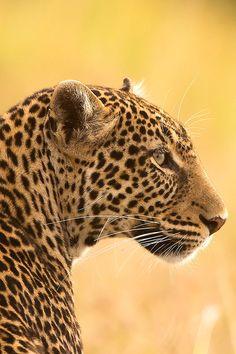 Winkelen én tegelijkertijd wilde luipaarden redden? Dat kan! http://www.stichtingspots.nl/index.php?page=2542