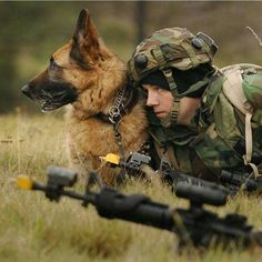 K9 Veterans Day is an opportunity for us all to remember and reflect on the invaluable contributions these dogs make. Military Working Dogs, Military Dogs, Military Service, Military Photos, Army Dogs, Police Dogs, Dog Soldiers, German Shepherd Dogs, German Shepherds