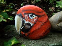 Red parrot rock.