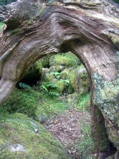 DUROGANTE MUDHOPPERS: Wistman's Wood, Spinsters' Rock and Wistman's Wood.