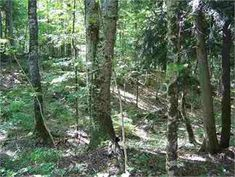 Nisula, Houghton County, Upper Peninsula, MI Land For Sale - 30 Acres