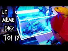 Aquarium Terrarium, Memes, Meme