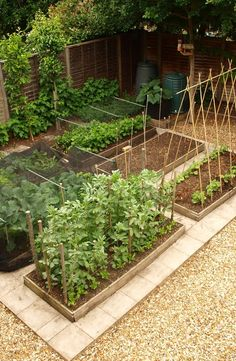 Stunning Play Garden Design Ideas For Your Kids Backyard Vegetable Gardens, Veg Garden, Vegetable Garden Design, Garden Care, Indoor Garden, Garden Landscaping, Outdoor Gardens, Vegetable Ideas, Plan Potager
