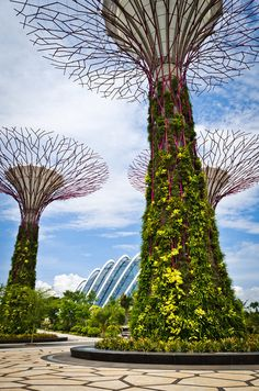 "These ""trees"" are part of Supertree Grove, an installment of Singapore's Gardens by the Bay. They are made up of a combination of plants and mechanics that are designed to be environmentally friendly. There is also a walkway that connects the trees so that the public can view the sights from a different perspective. I would really like to see these in real life some day!"