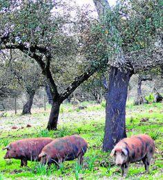 Una veintena de empresas, interesadas en la Ruta del Jabugo http://www.rural64.com/st/turismorural/Una-veintena-de-empresas-interesadas-en-la-Ruta-del-Jabugo-5239