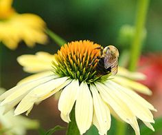 Feed Birds, Bees, and Butterflies: Planting flowers that attract wildlife adds a dimension to your garden and creates a vibrant atmosphere within its boundaries.