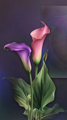Lily Painting Draw Flowers Small Paintings Watercolor Paintings Wallpaper For Your Phone Flower Prints Flower Art Calla Lily Beautiful Artwork Beautiful Flower Drawings, Beautiful Flowers Wallpapers, Calla Lillies, Calla Lily, Lilies, Cymbidium Orchids, Watercolor Flowers, Watercolor Paintings, Lily Painting