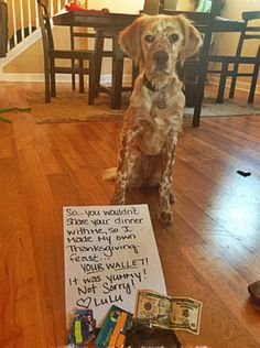 Some Helpful Ideas For Training Your Dog. Loving your dog does not mean you are willing to let him go hog wild on your possessions. That said, your dog doesn't feel the same way. Dog Shaming Pictures, Cute Puppy Pictures, 15 Dogs, Dog Calendar, Letting Go Of Him, Retriever Puppy, Dog Chews, Dog Memes, Training Your Dog