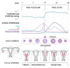 Ciclo sexual femenino (ciclo menstrual)
