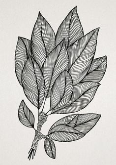 Flower Art Drawing, Doodle Art Drawing, Zentangle Drawings, Art Drawings Sketches, Zentangles, Zantangle Art, Pen Art, Doddle Art, Line Art Flowers