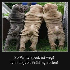 Besten Bilder, Videos und Sprüche und es kommen täglich neue lustige Facebook Bilder auf DEBESTE.DE. Hier werden täglich Witze und Sprüche gepostet! Keep Smiling, Funny Dogs, Funny Animals, Animals And Pets, Baby Animals, Just For Fun, Funny Cute, Funny Thank You, Just Smile