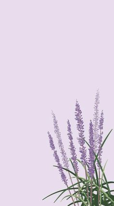 Mobile Wallpaper Is A Very Important Part Of Mobile Phones Page 9 Of 59 - Wallpaper Quotes Mobile Wallpaper, Wallpaper Sky, Tier Wallpaper, Iphone Background Wallpaper, Animal Wallpaper, Tumblr Wallpaper, Colorful Wallpaper, Flower Wallpaper, Wallpaper Quotes